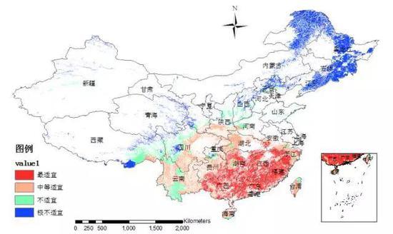 """图7 基于AHP-模糊综合评价方法的""""树流感""""在中国的潜在适生分布图"""
