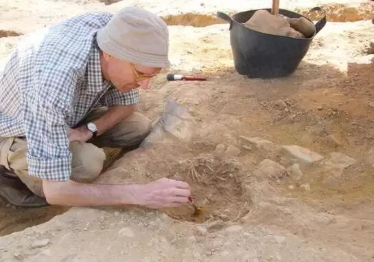 研究人员在埃及发掘猫的遗骸 图片来源:Hierakonpolis Expedition