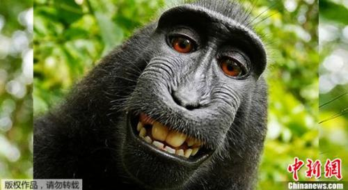 猕猴自拍照