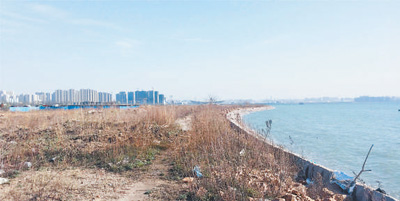 李沧区曾经的沿海荒地。资料照片