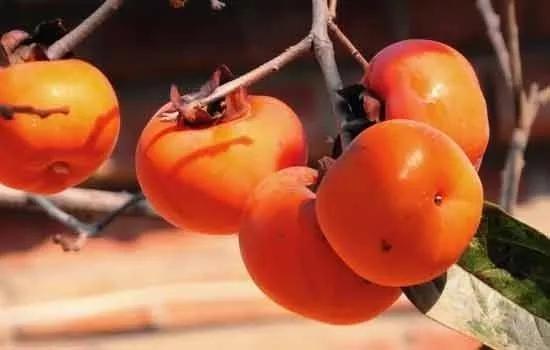在什么情况下会出事儿呢?1、高浓度胃酸条件下;2、低胃动力条件下;3、食用含有大量单宁的未成熟柿子的柿子皮。