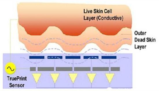 超声波式指纹工作原理(图片来自网络)