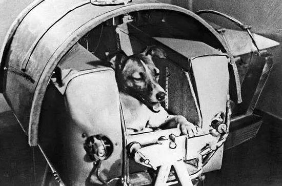 """1957年,太空狗""""莱卡""""正待升空"""