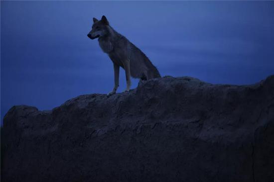 《狼图腾》剧照