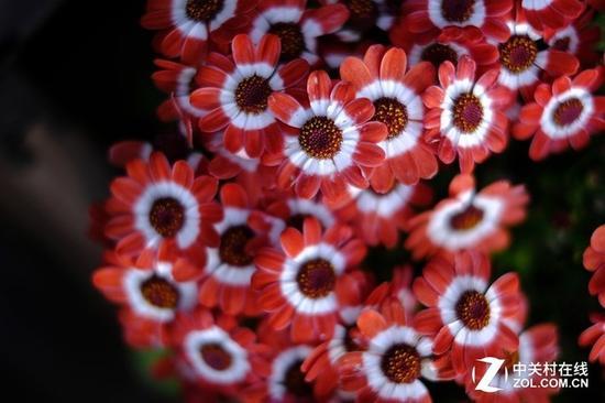 富士胶片滤镜,本身的色彩非常可靠,有着富士胶卷相机的味道