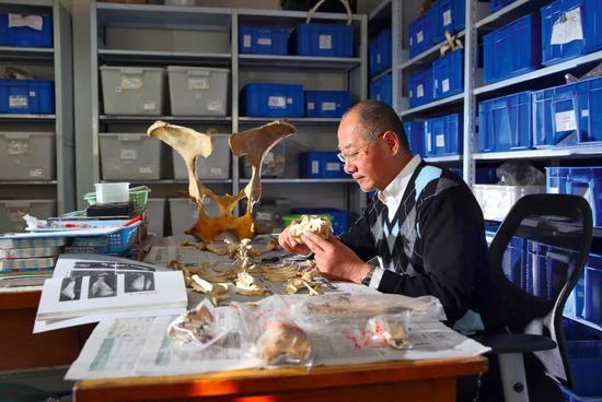 动物考古学家袁靖(于楚众 摄)