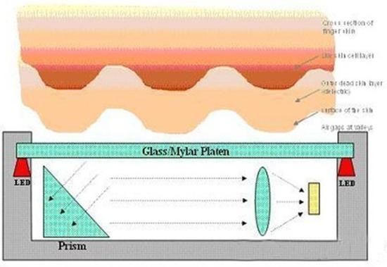 光学式指纹工作原理(图片来自网络)