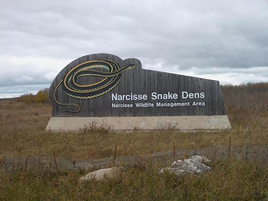 红边束带蛇冬眠场地(图片来自维基百科)