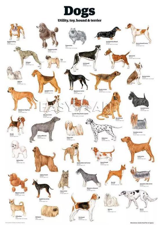 狗有着极为丰富的表观遗传多样性,目前世界上有数百个不同品种的狗,彼此之间外貌、性情差异极大。