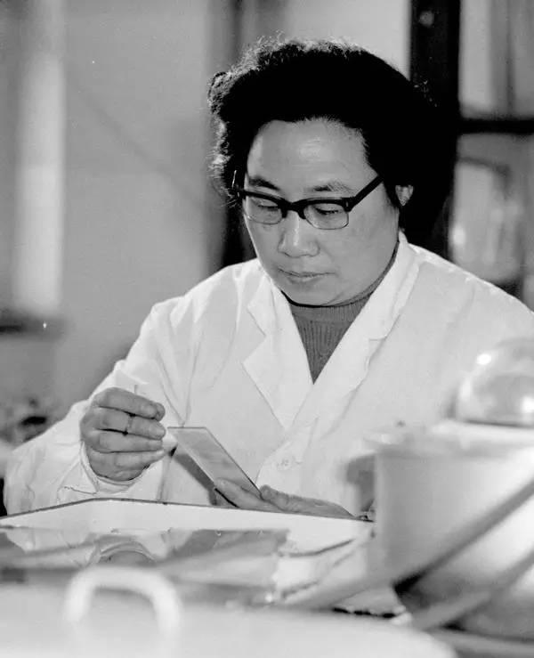 20世纪80年代初,任中医研究院中药研究所副研究员的屠呦呦在进行科研工作。 新华社记者 杨武敏 摄