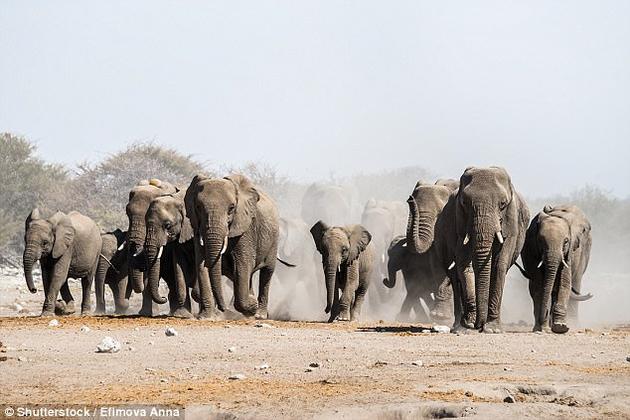 大型动物的重要性不但体现在粪便的数量上,而且在于它们能长距离迁移,从而令营养物质有效混合。