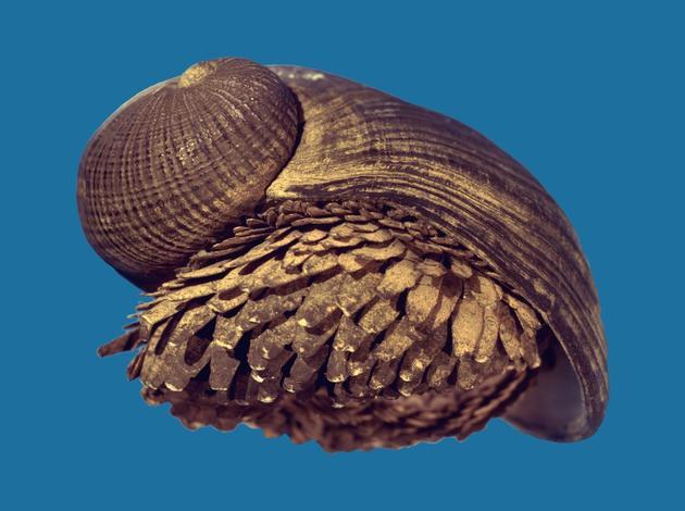 """鳞角腹足蜗牛的""""铁盔甲""""看起来金属感十足,堪称深海版的""""钢铁侠""""。"""