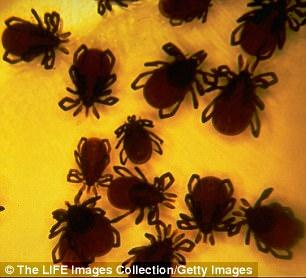 新研究指出,密集恐惧症可能是对体外寄生虫所致传染性疾病的演化反应。