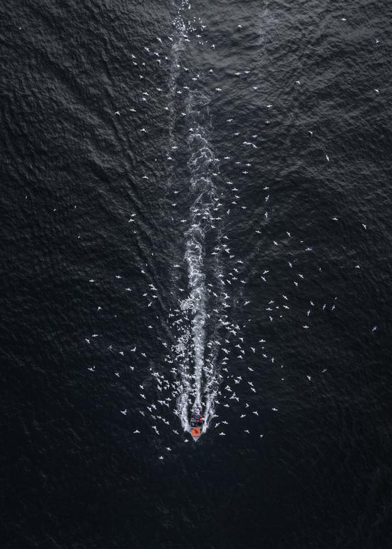 (夜色中满载归来的渔船引来一群海鸥,作者Drone Hikers)