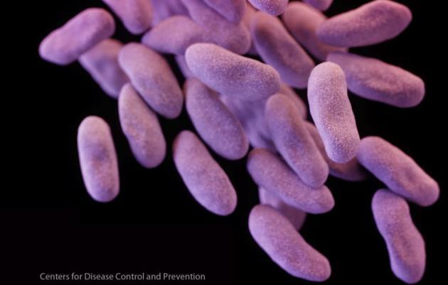 图为抗碳青霉素烯类抗生素肠内杆菌(CRE)示意图