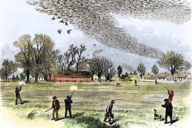 这张插画描绘了欧洲人射杀大群旅鸽的场景。插画作者史密斯・本尼特(Smith Bennett)
