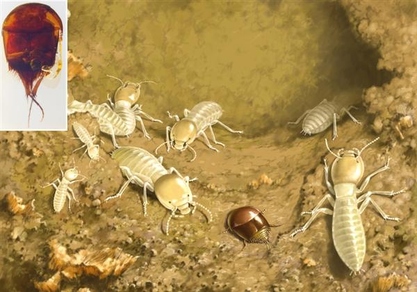 白垩纪�G客的生态复原图
